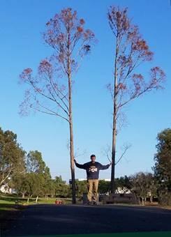 Diana, Tree Shover
