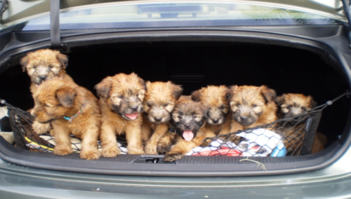 Trunk Puppies, Kevin