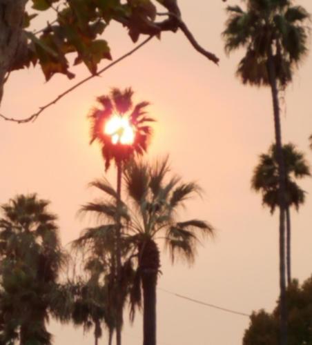 Fire Sunset, Diana