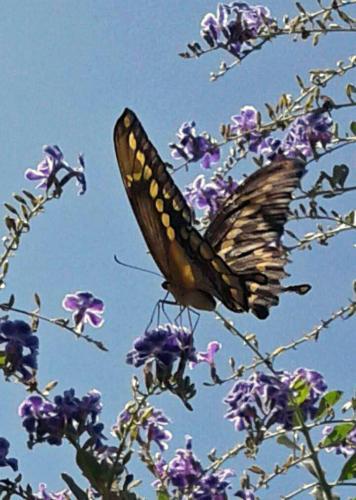 butterfly - Diane