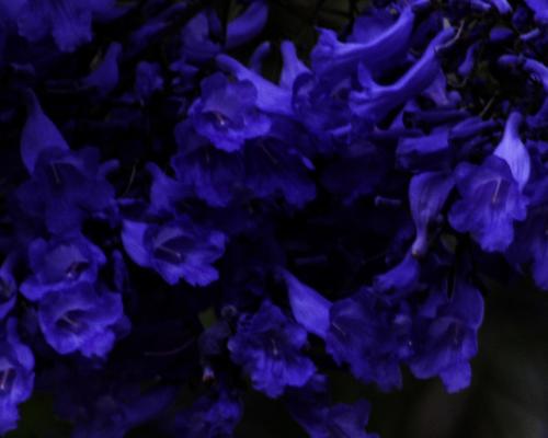 Flowers - Gary